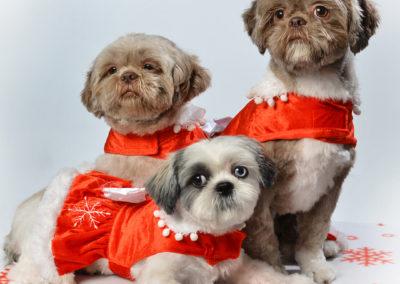 kerstfoto familie